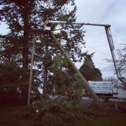 Danger Tree Removal In Langley, B.C.