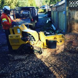 Mulching and Grinding Stumps in Langley, B.C.