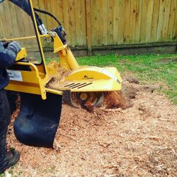 The Arbor Barber Stump Grinding And Mulching