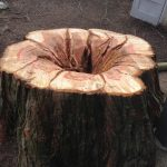 The-Arbor-Barber-Stump-To-Flowerbed-2