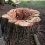 The-Arbor-Barber-Stump-To-Flowerbed-3