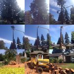 The-Arbor-Barber_Tree-Service-Langley_Before-and-After