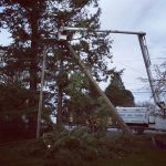 The-Arbor-Barber_Tree-Service-Langley_Boom-Truck-Cutting