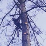 The-Arbor-Barber_Tree-Service-Langley_Cutting-Tree