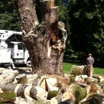 The-Arbor-Barber_Tree-Service-Langley_Jobsite