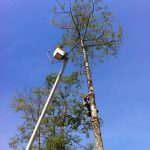 The-Arbor-Barber_Tree-Service-Langley_Tree-Cutting-in-Action